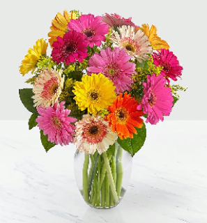 FTD Colorful World Gerbera Daisy Bqt